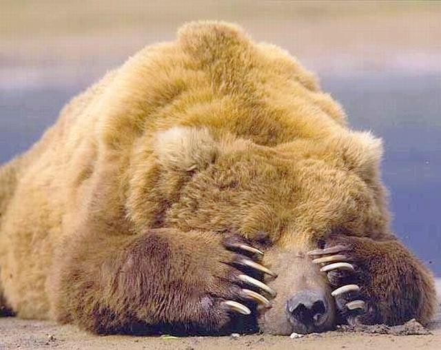 Які тварини впадають в сплячку