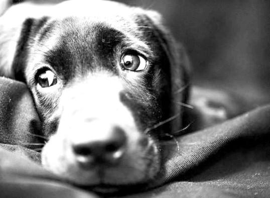 Основна помилка власників собак
