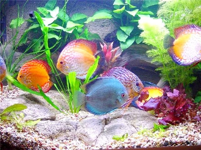 Чому акваріум каламутний