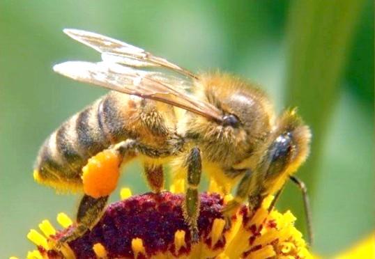 З чого почати бджільництво