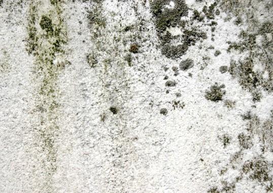 Чим шкідливий грибок на стінах