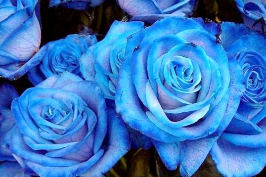 Що означає колір троянд