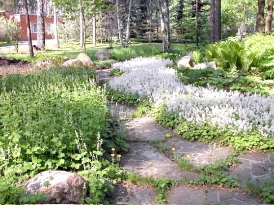 Що посадити в тінистому куточку саду