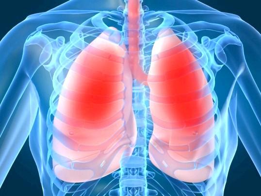 Що таке діафрагма людини і де вона знаходиться