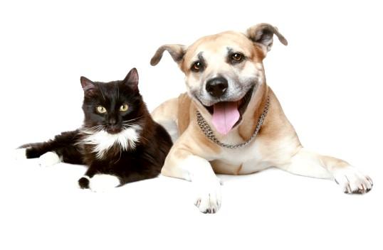 Що таке уремія у кішок і собак