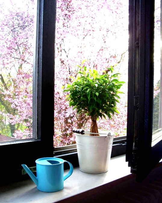 Енергія кімнатних квітів у будинку