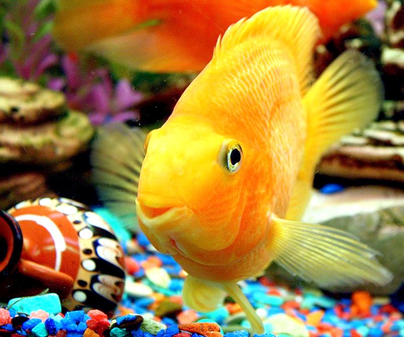 Як тримати риб в акваріумі