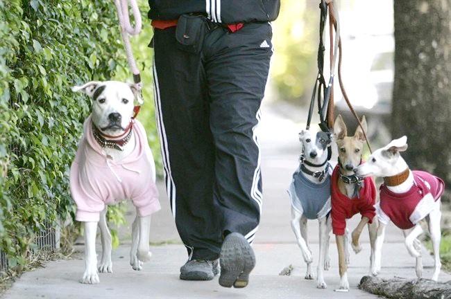 як треба вигулювати собаку