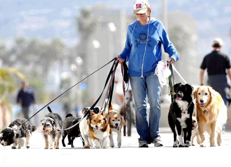 як дотримуватися правил вигулу собак