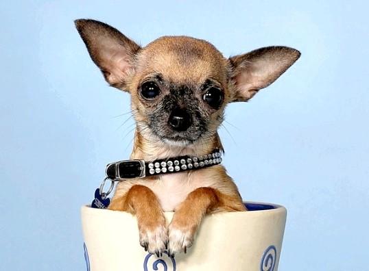 Яку породу собаки вибрати для квартири