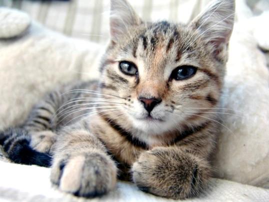 Кастрація котів: думки за і проти