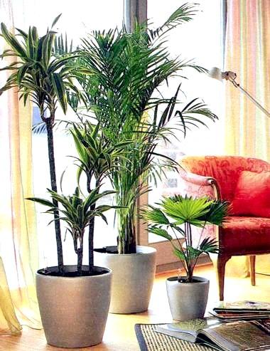 Органічні добрива для домашніх рослин