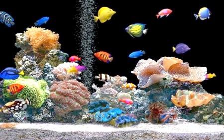 Чому дохнуть рибки в акваріумі