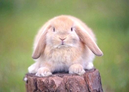 Чому кролик не їсть