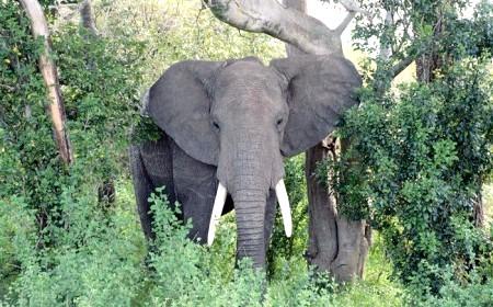 важке тварина в світі