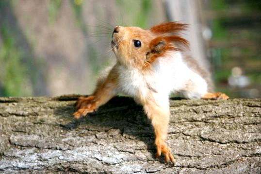 Скільки живе білка